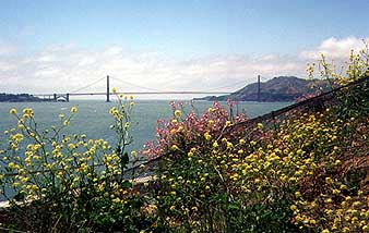 Flowers and the Golden Gate Bridge