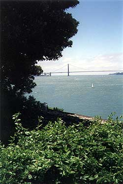 Golden Gate through the trees